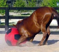 i want to get my Horse hope a toy like this and see what she would do lol Horses And Dogs, Cute Horses, Pretty Horses, Horse Love, Beautiful Horses, Animals Beautiful, Diy Horse Toys, Horse Care Tips, Horse Treats