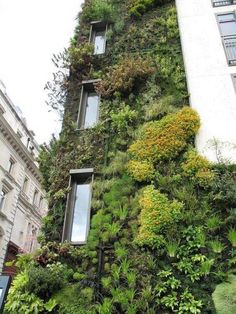 Urban Living Walls. What an opportunity to make the treehouse mesh with its environment