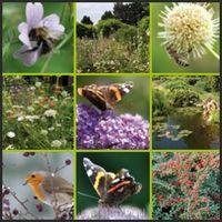 De Vitale Groene Stad - Wake-up call: gemeenten bescherm biodiversiteit