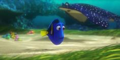 Screencap Gallery for Finding Dory Bluray, Disney, Pixar). Dory is a wide-eyed, blue tang fish who suffers from memory loss every 10 seconds or so. Dory Finding Nemo, Disney Pixar Movies, 2 Movie, Movie Collection, New Trailers, Good Movies, Cinema, Animals, Character