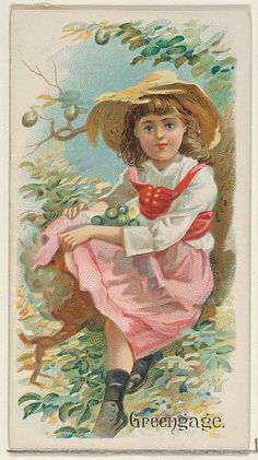 Greengage, from the Fruits series (N12) for Allen & Ginter Cigarettes Brands