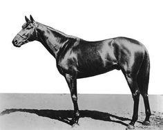 Plaudit | Winner of the 24th Kentucky Derby | 1898 | Jockey: Willie Simms | 4-Horse Field | $4,850 prize