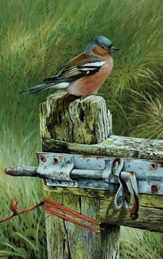 Terance James Bond art Terance James Bond was born in 1946 in the County of… Bird Pictures, Pictures To Paint, Pretty Birds, Beautiful Birds, Watercolor Bird, Watercolor Paintings, Bird Artists, Bird Drawings, Horse Drawings