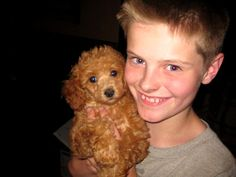 Brown Miniature Poodle Puppies For Sale Illinois Breeder Toy Poodle Puppies Miniature Poodles