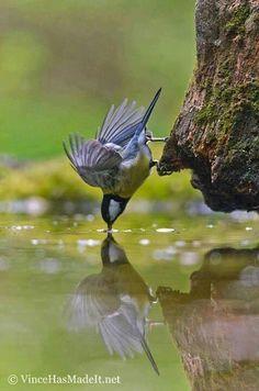 Birdie reflect kiss-kiss