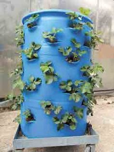 Great idea for strawberry plants. Do you have really poor soil? Lack the funds for truckloads of amendments? Container gardens offer one possible solution. Strawberry Beds, Strawberry Tower, Strawberry Planters, Garden Planters, Garden Beds, Herb Garden, Cactus E Suculentas, Tower Garden, Diy Garden Projects