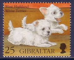 West Highland White Terrier Dogs Gibraltar MNH stamp