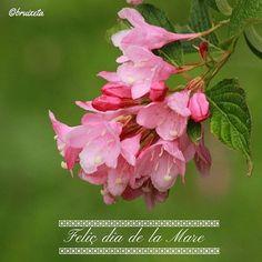 #diadelamare #diumenge #maig #primavera#fotografia #díadelamadre #mothersday  #Sunday #May #Spring #instagood #canon #photograph #macro
