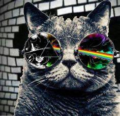 Kitty loves Pink Floyd