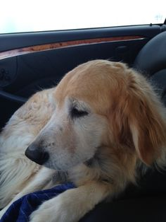On the way to the vet with an ear infection...again.
