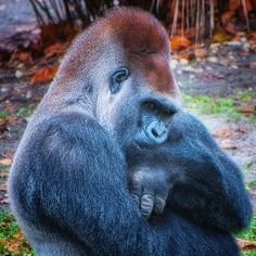 deep thoughts,Jacksonville Zoo,photo by Thomas Alexander