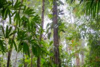 fog coming into the forest of los patos trail Corcovado National Park Parque Nacional Corcovado, Corcovado National Park, National Park Tours, Big Bird, Costa Rica, Trail, Wildlife, Nature, Plants