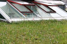 Mehr Lebensraum für Flora und Fauna, ein besseres Mikroklima, weniger Heizkosten und eine schöne Aussicht – die Dachbegrünung erlebt eine kleine Renaissance in Zeiten des Klimawandels. Die DBU fördert nun Projekte zur Dachbegrünung für den Arten- und Klimaschutz, vor allem in den Städten.