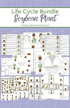 Come and take a look at our fantastic printable Soybean Plant Life Cycle Worksheets and Activity Set that your kids will love! Kids Learning Activities, Educational Activities, Teaching Kids, Sequencing Activities, Science Activities, Science Lessons, Science Resources, Science Ideas, Art Lessons