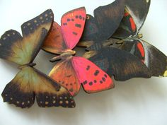 Autumn Butterflies wooden