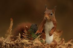 Cute Critters Frolicking Around Forests of Holland