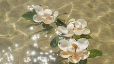 Three large magnolia blooms float on the sparkling water of Santa Rosa Sound on the Gulf Coast of Florida. Water Aesthetic, Spring Aesthetic, Aesthetic Drawing, Aesthetic Gif, Flower Aesthetic, Aesthetic Pictures, Aesthetic Wallpapers, Aesthetic Vintage, Orange Aesthetic