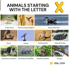 Animals that Start with X Alphabetical List Of Animals, Xingu, Ground Squirrel, Hacker Wallpaper, Visual Dictionary, Water Pollution, English Idioms, Animal Species, Armadillo