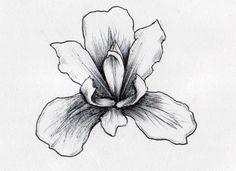 Iris Flowers Drawings - Flowers : Tree of Life #v98NWMJg0n