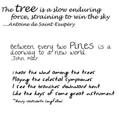 Tree Quotes by Cupeno - Kaylene, via Flickr