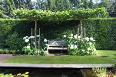 Looking into a slender but cozy garden – Het Nieuwsblad - Innen Garten - Eng Back Gardens, Small Gardens, Outdoor Gardens, Hydrangea Landscaping, Home Landscaping, Backyard Paradise, Backyard Retreat, Boxwood Garden, Backyard Ideas For Small Yards