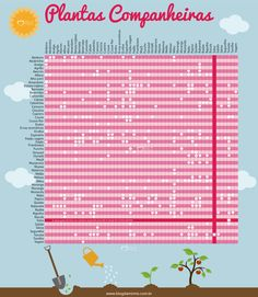 Plantas companheiras - Blog da Mimis - A escolha do lugar de cada espécie na hora de plantar faz muita diferença na qualidade da colheita.