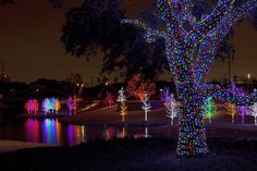 VITRUVIAN LIGHTS -- Wander through Vitruvian Park's 12 acres and view more than 550 illuminated trees in this modern-looking display (the large number of single-color trees adds to the effect). There'll be performances by Mars Hill on Dec. 6, Dallas String Quartet on Dec. 13 and Chris Rivers Band on Dec. 20. The light display continues through Jan. 1 from 6 to 10 p.m. at the park in Addison. Free. vitruvianpark.com.