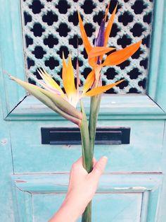 Bird of paradise flower - visual diary   Lily.fi