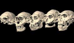 humanoid skull - Google Search