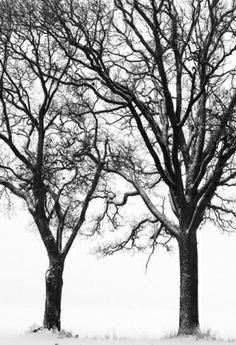 Sitting in a Tree Mural (P020501-4) - Mr Perswall Wallpapers - A digitally enhanced black on white photo of winter trees. Total mural size 1.8m wide x 2.65m high. NOT AS STATED BELOW. SAMPLES NOT AVAILABLE.