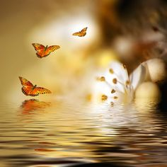 Genesis by Josep Sumalla - Photo 59576270 / Very Beautiful Images, Beautiful Flowers, Creative Photography, Art Photography, Pixel Art, Peace And Love, We Heart It, Butterfly, The Incredibles