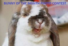 Bunny of the month photo contest
