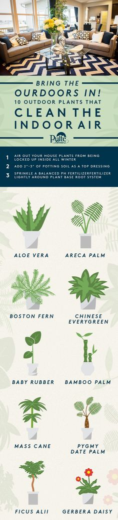 Get some fresh air this summer even while you're indoors! These houseplants clean the air while adding beauty into your home decor. | Pulte Homes
