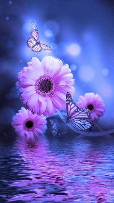 Good Night and Sweet Dreams! God bless you. Butterfly Background, Butterfly Wallpaper, Butterfly Art, Good Night Image, Good Morning Good Night, Night Messages, Good Night Sweet Dreams, Night Wishes, Good Night Quotes