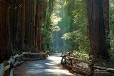 Located north of San Francisco, Muir Woods is named after naturalist and Sierra Club founder John Muir. This national park contains 240 acres of ancient Coastal Redwood forests #WeekendGetaways #MuirWoods