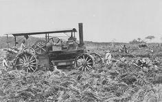1905-1915: Mesin uap pembajak tanah di perkebunan tembakau Bandar Klippa, Sumatera Timur. Juru foto: Stafhell & Kleingrothe (sumber foto).