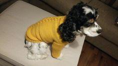 Koiralle neulottu villapaita