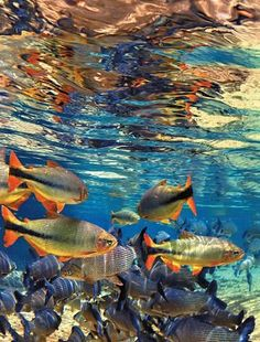 Bonito . MS - Brasil Beautiful World, Beautiful Images, Places To Travel, Places To Go, Exotic Beaches, 3d Home, Marine Life, Sea Creatures, Belle Photo