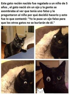 Animals And Pets, Baby Animals, Funny Animals, Cute Animals, Bts Memes, Funny Memes, Sad Texts, Funny Spanish Memes, Funny Cute