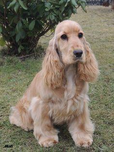 Labrador, Dogs, Animals, Animales, Animaux, Pet Dogs, Labradors, Doggies, Animal