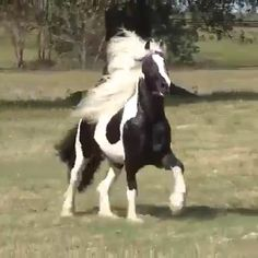 Beautiful horse in motion Cute Horses, Pretty Horses, Horse Love, Beautiful Horses, Animals Beautiful, Horse Photos, Horse Pictures, Animal Pictures, Cute Funny Animals