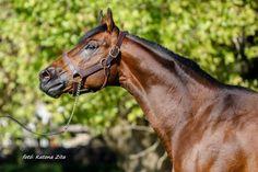 Thoroughbred, Horses, Animals, Animales, Animaux, Animal, Animais, Horse