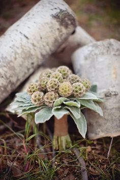 the bridemaid's bouquet was made up of all scabiosa pods and a collar of fuzzy, mint-green lamb's ear...