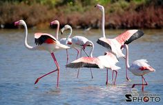 #pinkflamingos #flamingos #sardinia #nature #amazing #italy  By simon ska Photography