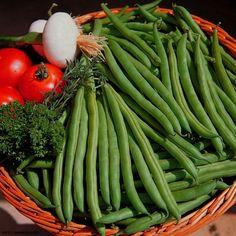 Horta - como plantar Vagem (Phaseolus vulgaris) #alcanceosucesso