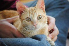 ALEXANDER - Gato adoptado - AsoKa el grande