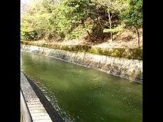 琵琶湖疏水:京都府京都市 - YouTube