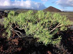 Harsh volcanic landscape near La Restinga on El Hierro, Canary islands (Photo: Janka) - http://www.volcanodiscovery.com