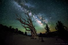 "spaceexp:  ""Guardian Of The Night"". The Milky Way above the White Mountains of California. Photo by Michael Shainblum. ."