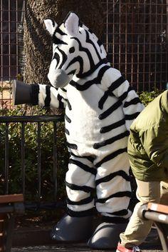 「シマった!シマウマが脱走したぞ」 上野動物園の訓練、真剣なのにホッコリ(画像集)